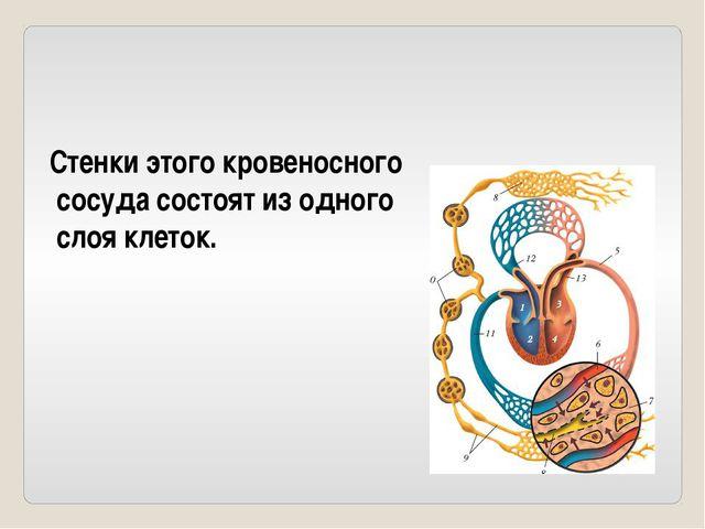 Что происходит в альвеолах легких у человека?