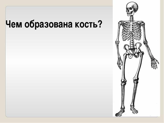 Что контролирует работу скелетных мышц?