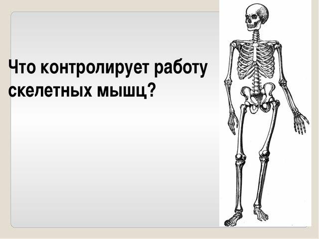 Кости скелета, отдела тела – рука.