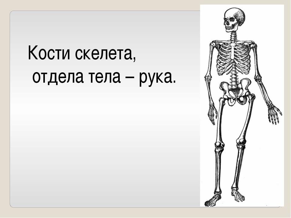 Какую часть костной системы называют «фабрикой крови»?