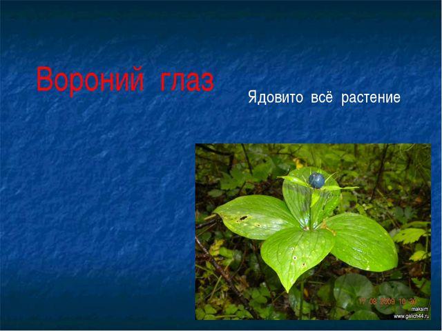 Вороний глаз Ядовито всё растение