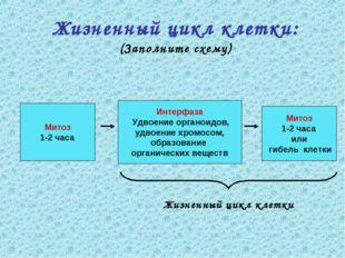Жизненный цикл клетки: (Заполните схему) Митоз 1-2 часа Митоз 1-2 часа или ги