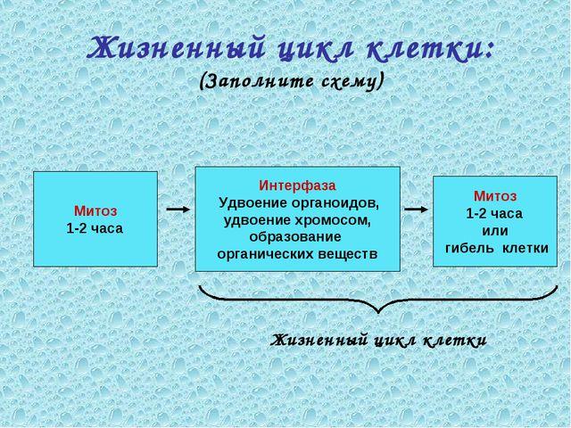 Жизненный цикл клетки: (Заполните схему) Митоз 1-2 часа Митоз 1-2 часа или ги...