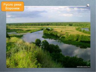 Русло реки Воронеж
