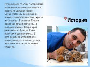 История Ветеринарная помощь с элементами врачевания животных появилась в пери