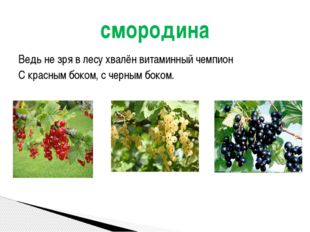 Ведь не зря в лесу хвалён витаминный чемпион С красным боком, с черным боком.