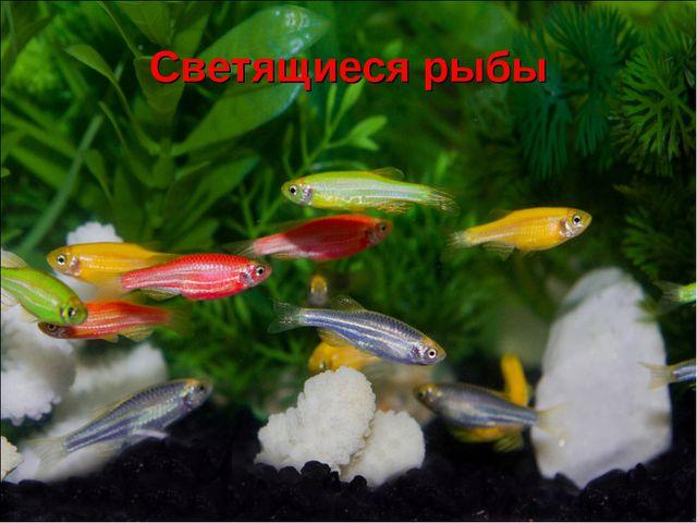 Светящиеся рыбы