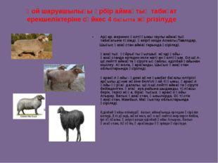 Қой шаруашылығы әрбір аймақтық табиғат ерекшеліктеріне сәйкес 4 бағытта жүрг