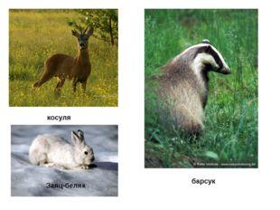 косуля Заяц-беляк барсук
