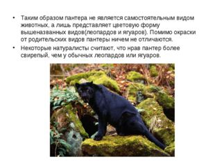 Таким образом пантера не является самостоятельным видом животных, а лишь пре