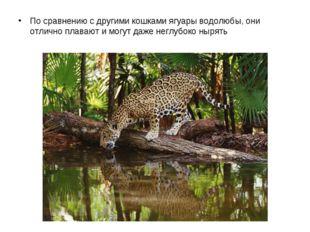 По сравнению с другими кошками ягуары водолюбы, они отлично плавают и могут