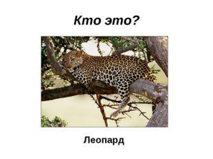 Кто это? Леопард