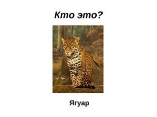 Кто это? Ягуар