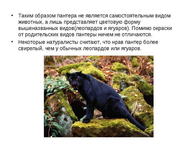 Таким образом пантера не является самостоятельным видом животных, а лишь пре...