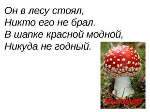 Он в лесу стоял, Никто его не брал. В шапке красной модной, Никуда не годный.