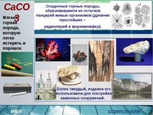Осадочные горные породы, образовавшиеся из остатков панцирей живых организмов