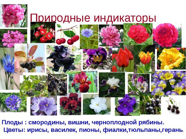 Природные индикаторы Плоды : смородины, вишни, черноплодной рябины. Цветы: ир...