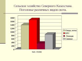 Сельское хозяйство Северного Казахстана. Поголовье различных видов скота.