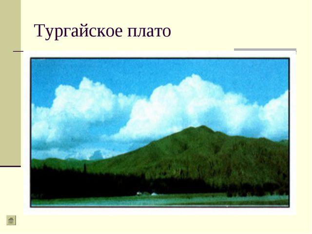 Тургайское плато