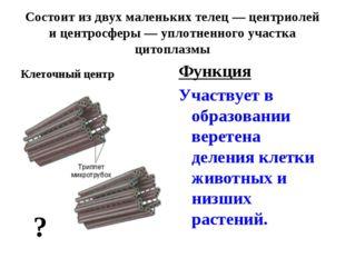 Состоит из двух маленьких телец — центриолей и центросферы — уплотненного уча