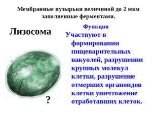Мембранные пузырьки величиной до 2 мкм заполненные ферментами. Функции Участ