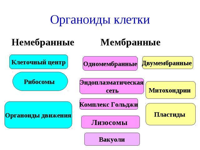 Органоиды клетки Немебранные Мембранные Одномембранные Двумембранные Эндоплаз...