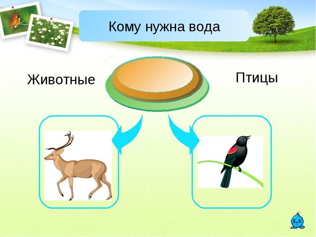 Животные Птицы