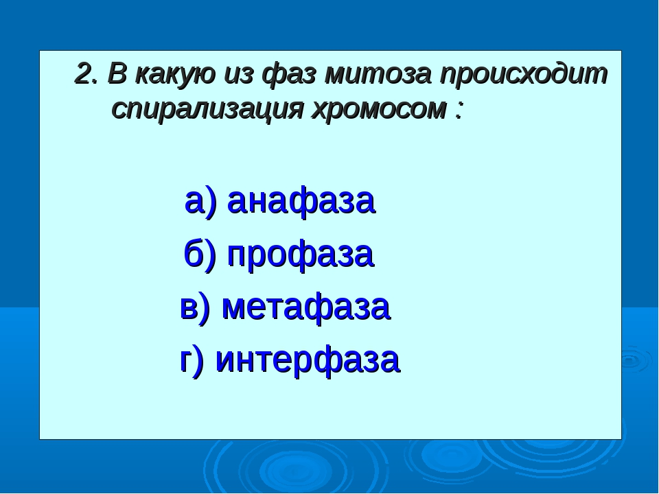2. В какую из фаз митоза происходит спирализация хромосом : а) анафаза  б)...