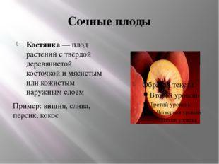 Сочные плоды Костянка— плод растений с твёрдой деревянистой косточкой и мяси