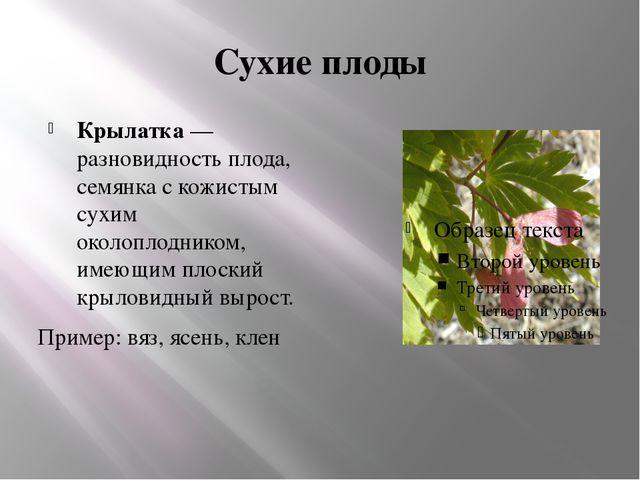 Сухие плоды Крылатка— разновидность плода, семянка с кожистым сухим околопло...