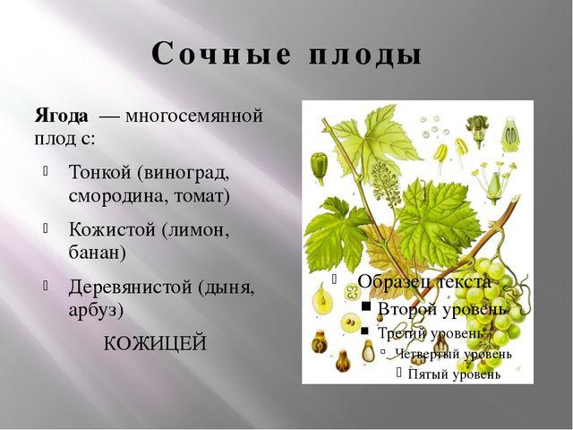 Сочные плоды Ягода — многосемянной плод с: Тонкой (виноград, смородина, тома...