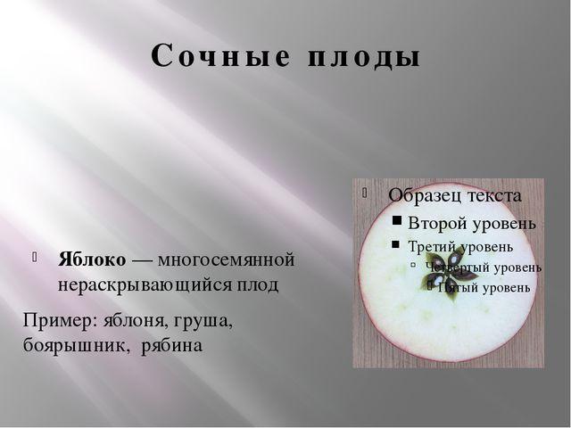 Сочные плоды Яблоко — многосемянной нераскрывающийся плод Пример: яблоня, гру...