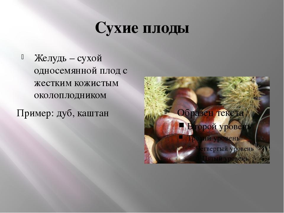 Сухие плоды Желудь – сухой односемянной плод с жестким кожистым околоплоднико...