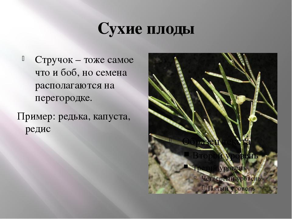 Сухие плоды Стручок – тоже самое что и боб, но семена располагаются на перего...