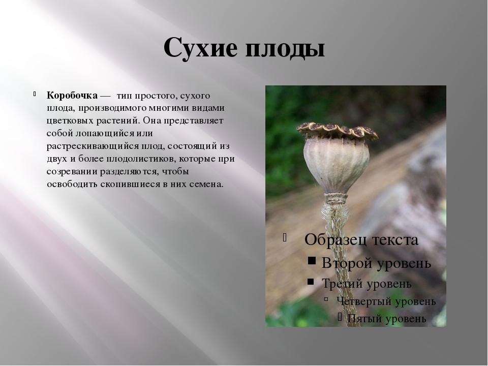 Сухие плоды Коробочка — тип простого, сухого плода, производимого многими вид...