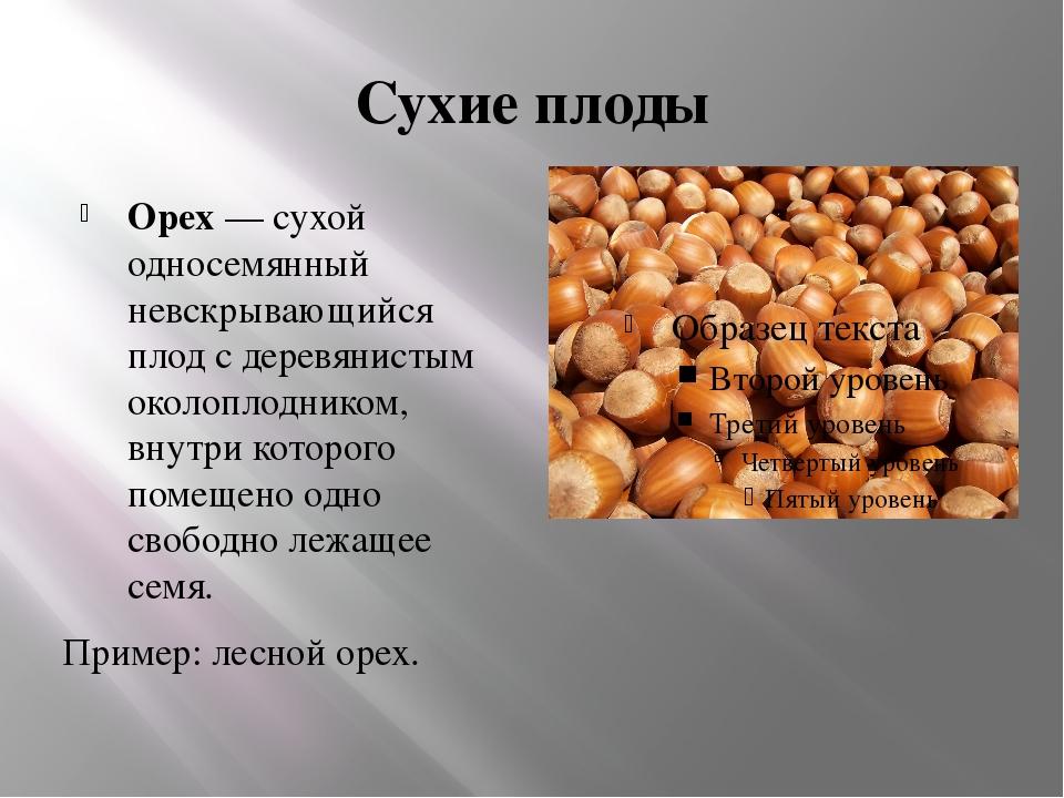 Сухие плоды Орех — сухой односемянный невскрывающийся плод с деревянистым око...