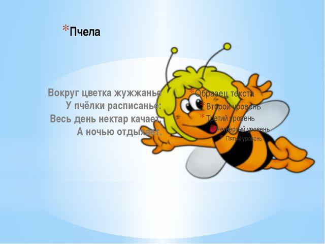 Пчела Вокруг цветка жужжанье У пчёлки расписанье: Весь день нектар качает, А...