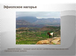 Эфиопское нагорье Эфиопское нагорье – огромный горный массив с цепями высок