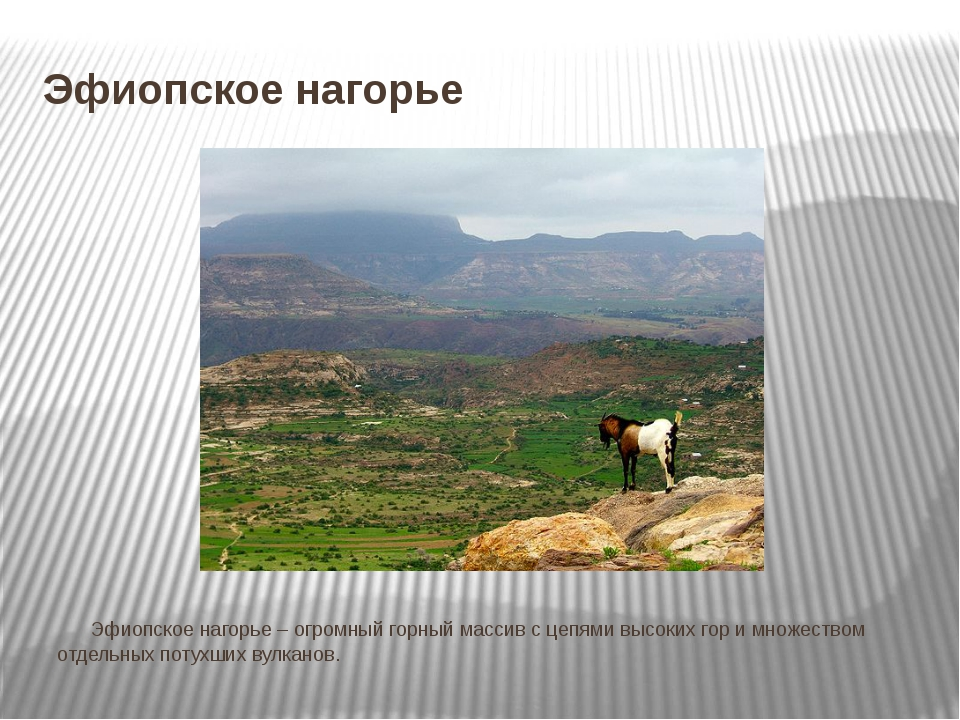 Эфиопское нагорье Эфиопское нагорье – огромный горный массив с цепями высок...