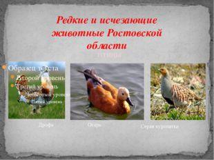 Редкие и исчезающие животные Ростовской области Дрофа Серая куропатка ПТИЦЫ О