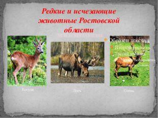 Редкие и исчезающие животные Ростовской области Косуля Лось МЛЕКОПИТАЮЩИЕ Олень