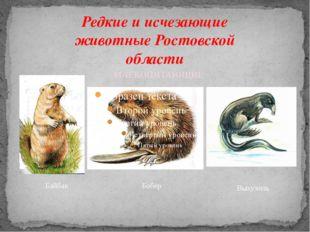Редкие и исчезающие животные Ростовской области Байбак Бобер МЛЕКОПИТАЮЩИЕ Вы