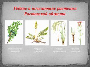 Редкие и исчезающие растения Ростовской области Можжевельник казацкий Астрага