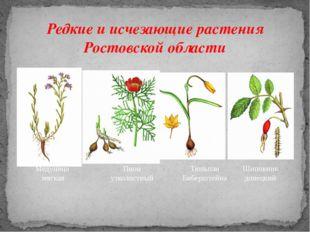 Редкие и исчезающие растения Ростовской области Медуница мягкая Пион узколист