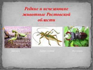 Редкие и исчезающие животные Ростовской области Богомол Дыбка степная Жук-оле