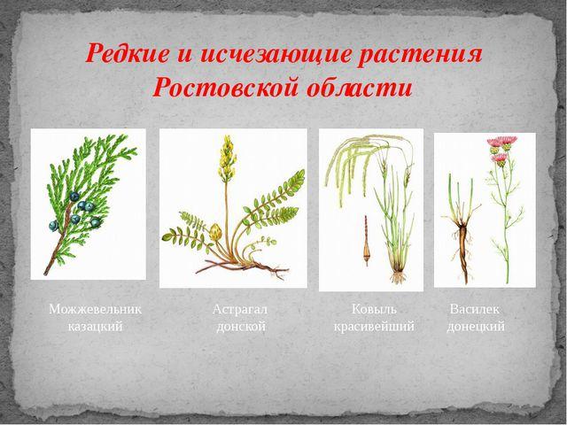Редкие и исчезающие растения Ростовской области Можжевельник казацкий Астрага...