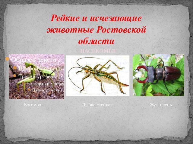 Редкие и исчезающие животные Ростовской области Богомол Дыбка степная Жук-оле...