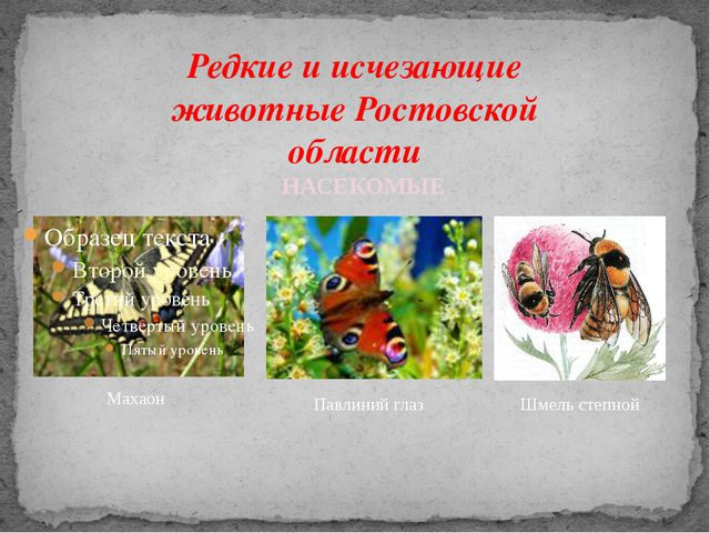 Редкие и исчезающие животные Ростовской области Махаон Павлиний глаз Шмель ст...