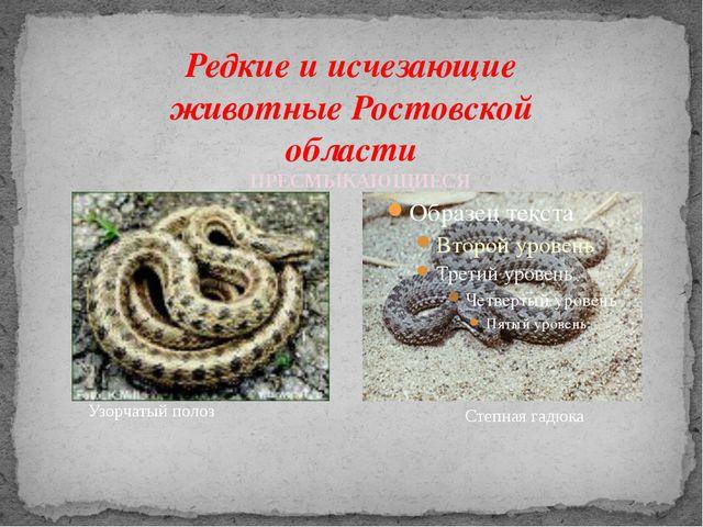 Редкие и исчезающие животные Ростовской области Узорчатый полоз Степная гадюк...