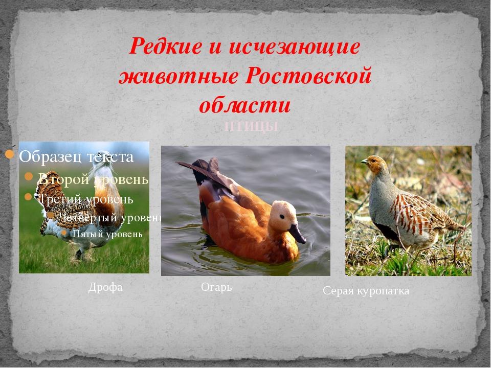 Редкие и исчезающие животные Ростовской области Дрофа Серая куропатка ПТИЦЫ О...